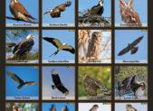 f6-birds-of-prey